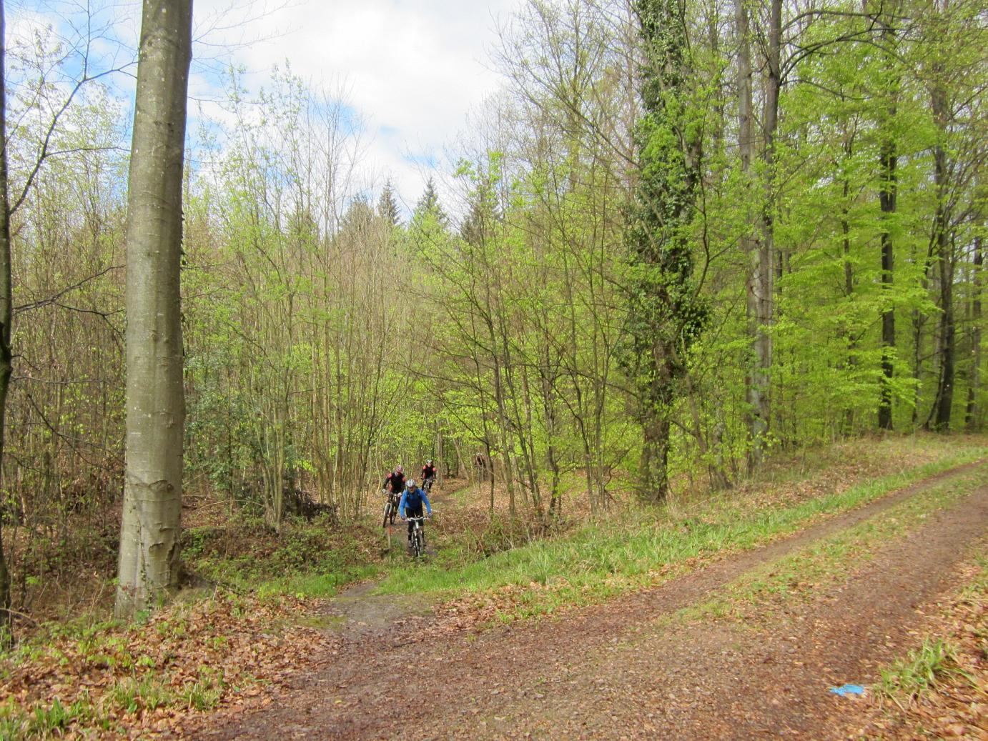 Trail bei Bombach
