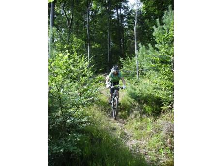 Trail auf dem Langenhard